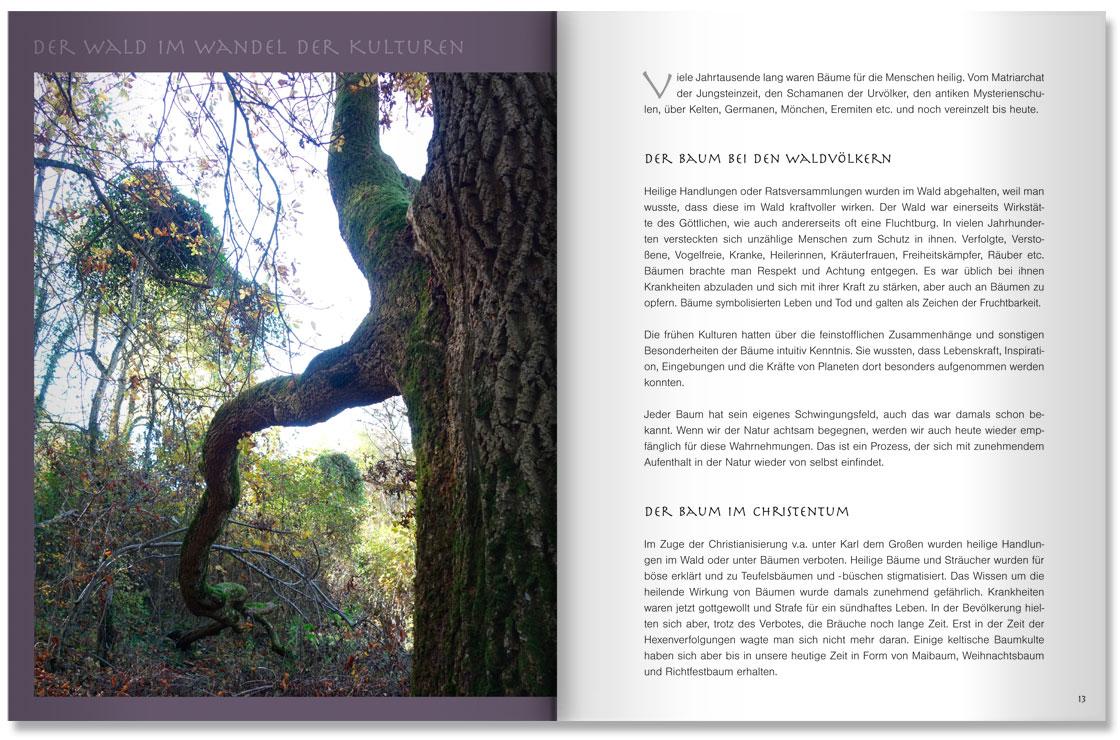 S. 12-13 Im Land der Bäume by M. Grauer und M. Haeberlein