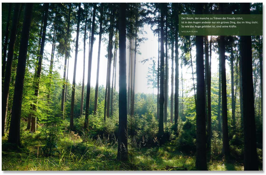 S. 14-15 Im Land der Bäume by M. Grauer und M. Haeberlein Design by blick-7