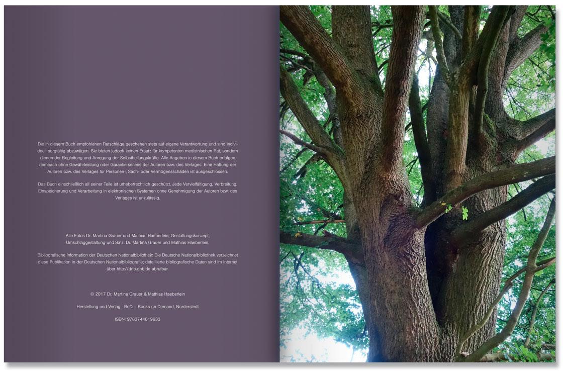 S. 4-5 Im Land der Bäume by M. Grauer u. M. haeberlein