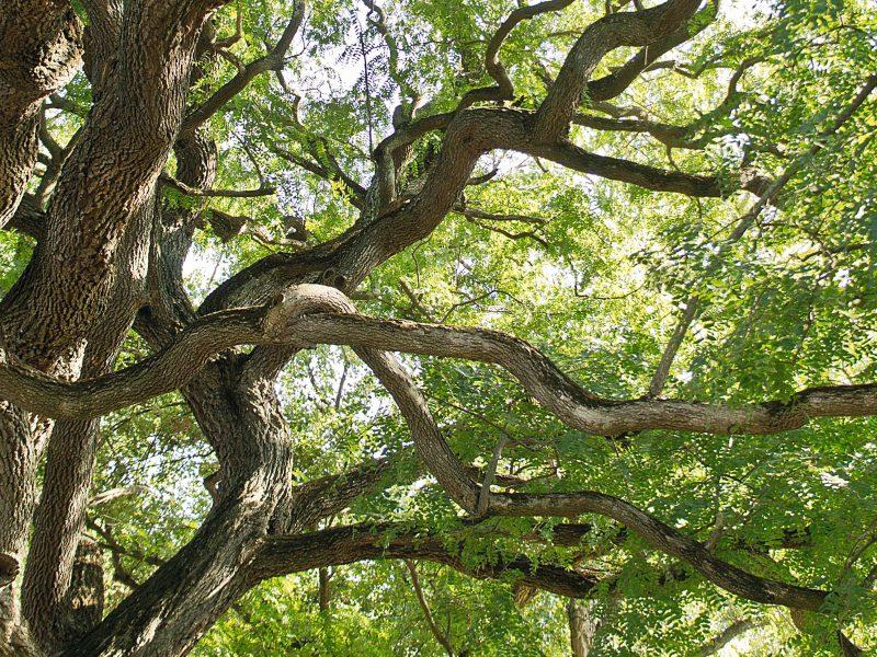 Im Land der Bäume